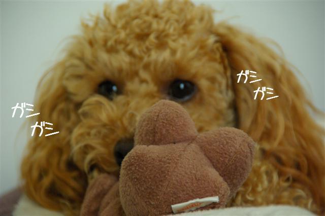 2008.1.9ウサ子 049 (Small)