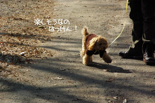 2008.1.25doggarden 048 (Small)