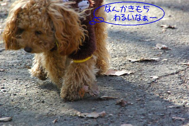2008.1.25doggarden 067 (Small)