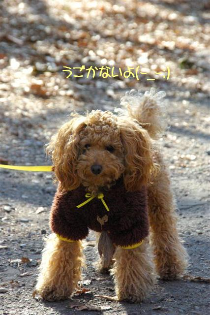 2008.1.25doggarden 071 (Small)
