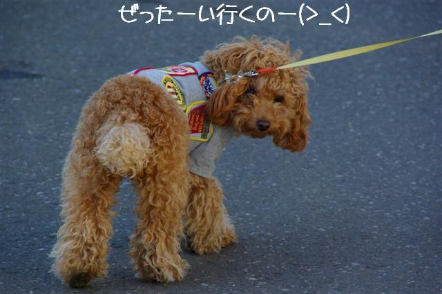 2008.2.5散歩 090 (Small)