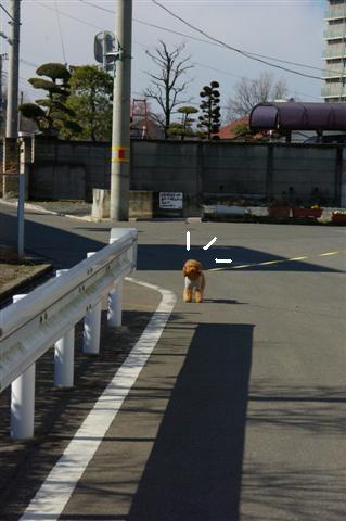 2008.2.5散歩 103 (Small)