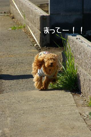 2008.2.5散歩 114 (Small)