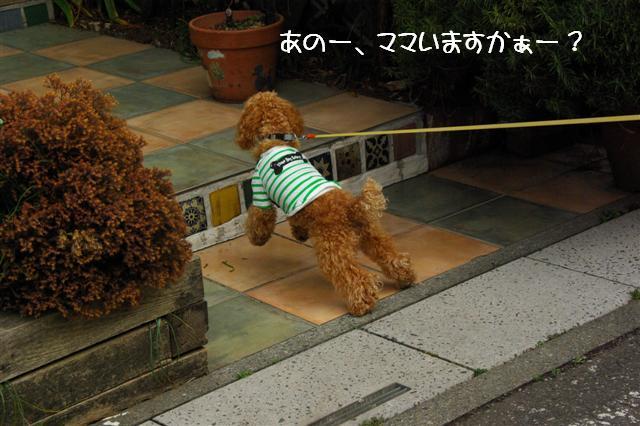 2008.3.12お散歩 079 (Small)