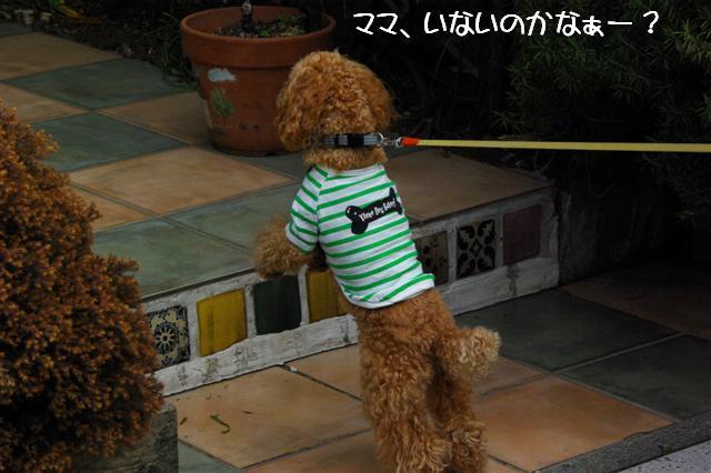 2008.3.12お散歩 080 (Small)