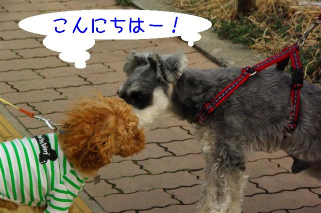 2008.3.12お散歩 084 (Small)