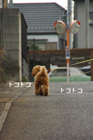 2008.3.12お散歩 087 (Small)