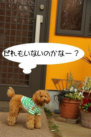 2008.3.12お散歩 099 (Small)