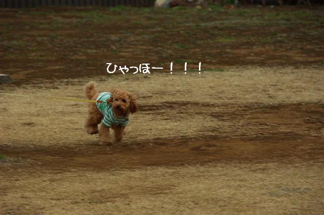 2008.3.12お散歩 109 (Small)