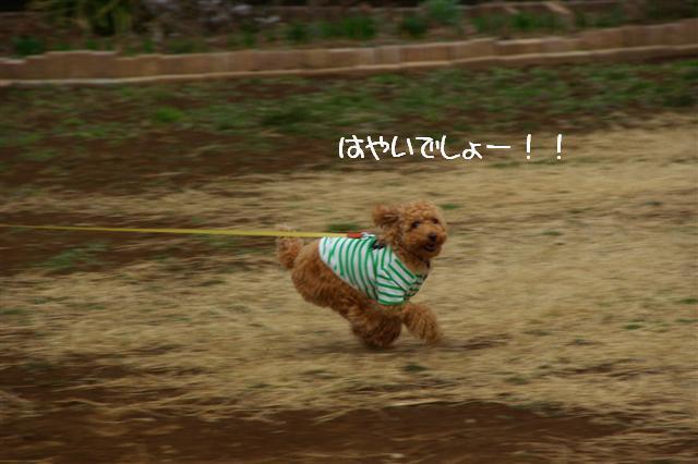 2008.3.12お散歩 129 (Small)