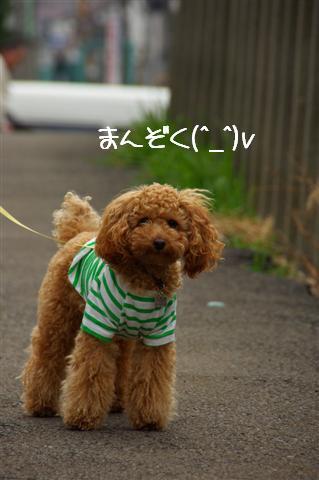 2008.3.12お散歩 131 (Small)