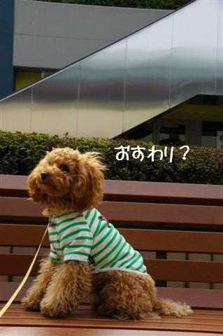 2008.3.12お散歩 059 (Small)