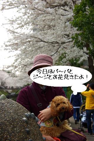 2008.3.29花見 010 (Small)