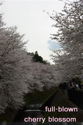 2008.3.29花見 015 (Small)