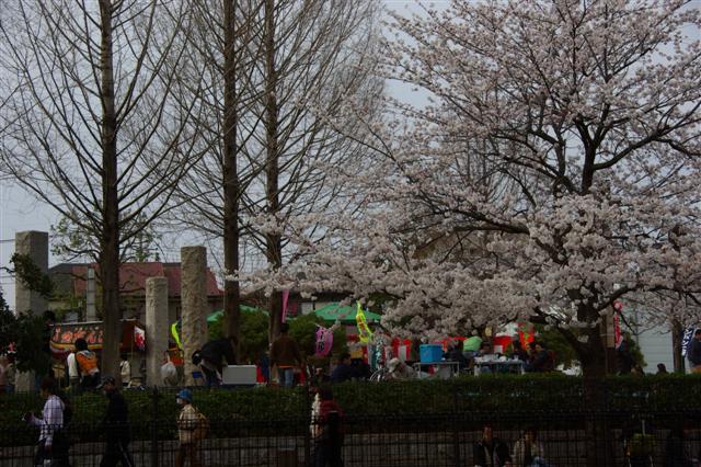 2008.3.29花見 019 (Small)