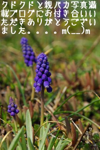 2008.4.2トリミング&再桜 329 (Small)