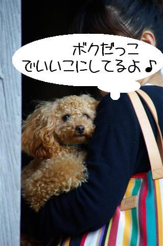 2008.4.18豊橋 022 (Small)