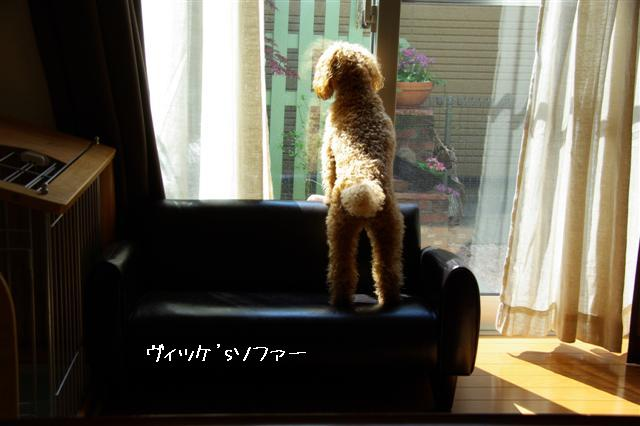 2008.4ソファー 002 (Small)