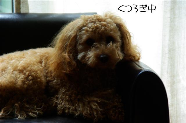 2008.4ソファー 030 (Small)
