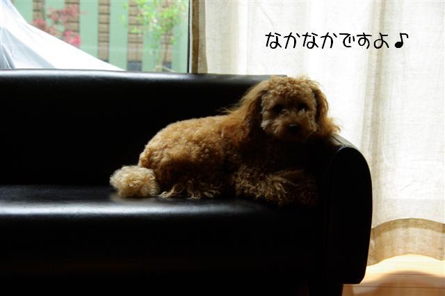 2008.4ソファー 037 (Small)