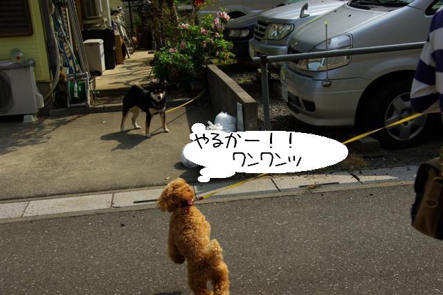 2008.5.1バテバテ散歩 090 (Small)