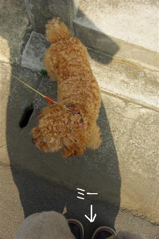 2008.5.1バテバテ散歩 113 (Small)