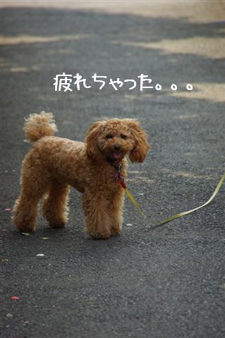 2008.5.1バテバテ散歩 118 (Small)