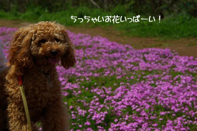 2008.5.3長瀞&柴桜 020 (Small)