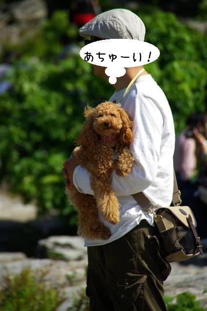 2008.5.3長瀞&柴桜 078 (Small)