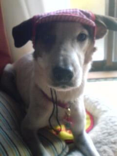 帽子をかぶったルナさん