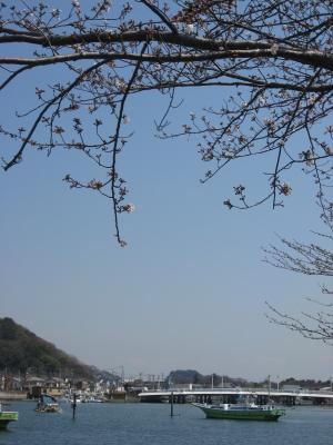 桜咲きはじめ
