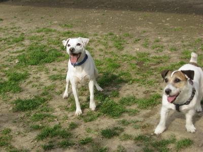 ボール命犬たち