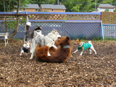 大型犬キラー・キャメルちゃん