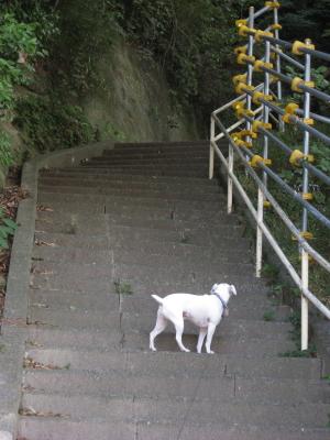 階段上がって