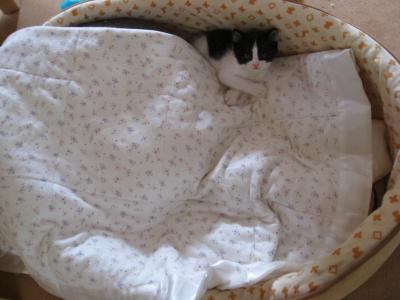 ベッドをとってみた