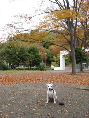 ご近所の公園