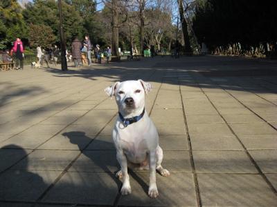 駒沢公園ラン