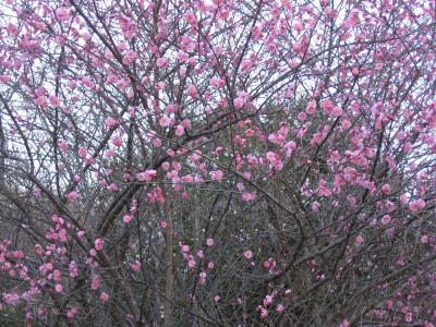 春も近くに