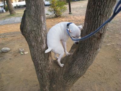 木に登る?