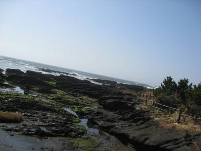 天神島臨海自然教育園のあたり