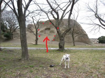 犬地蔵スポット