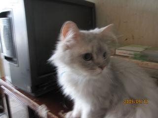 各務原猫4