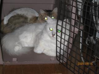 一階の猫ちゃん2.jpeg
