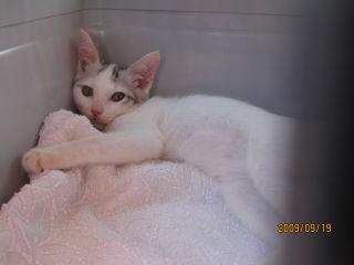 子猫2ヶ月半♂