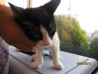 黒白子猫4