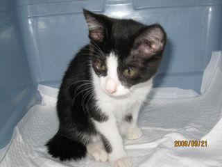 黒白子猫2