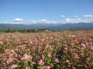 赤ソバの花風景.jpeg