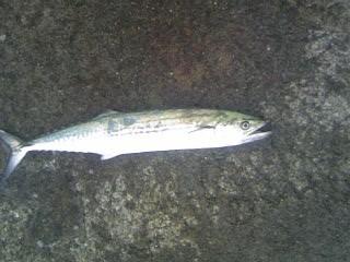 200803suesagosi1.jpg