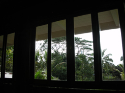 20090126kitchenwindows4.jpg