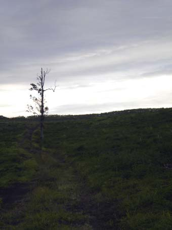 20090721walk2.jpg